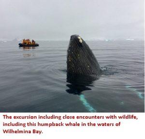 Humpback Whale in Wilhelmina Bay